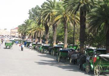 Promenades en Calèche dans Marrakech